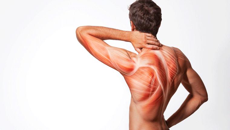 筋肉痛が起きるメカニズム